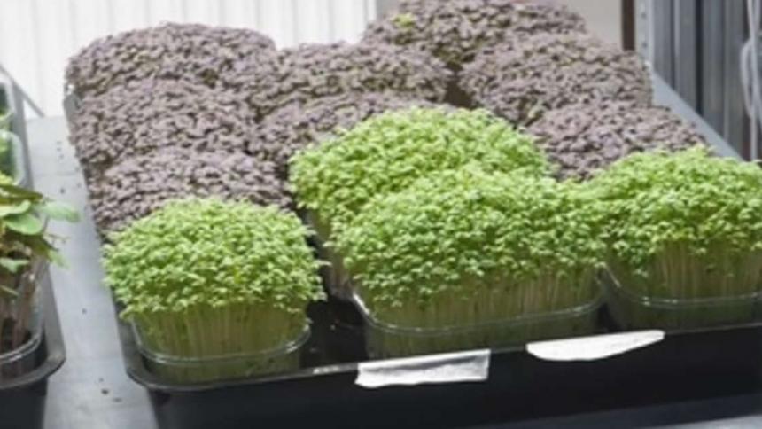 Microvegetales, los ingredientes del futuro para una alimentación sostenible