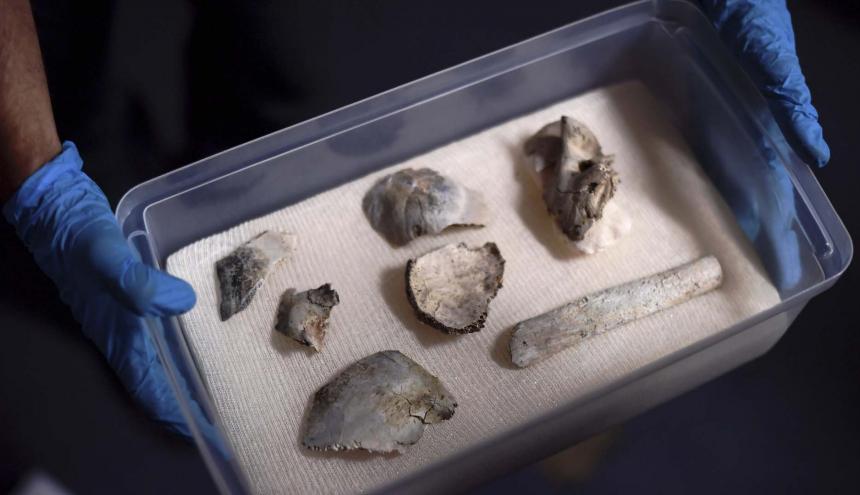 El 80% del cráneo del fósil fue encontrado.