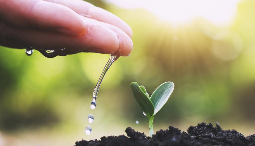 Los ecosistemas nos proporcionan alimentos, aire puro, agua y otros beneficios de abastecimiento y regulación.