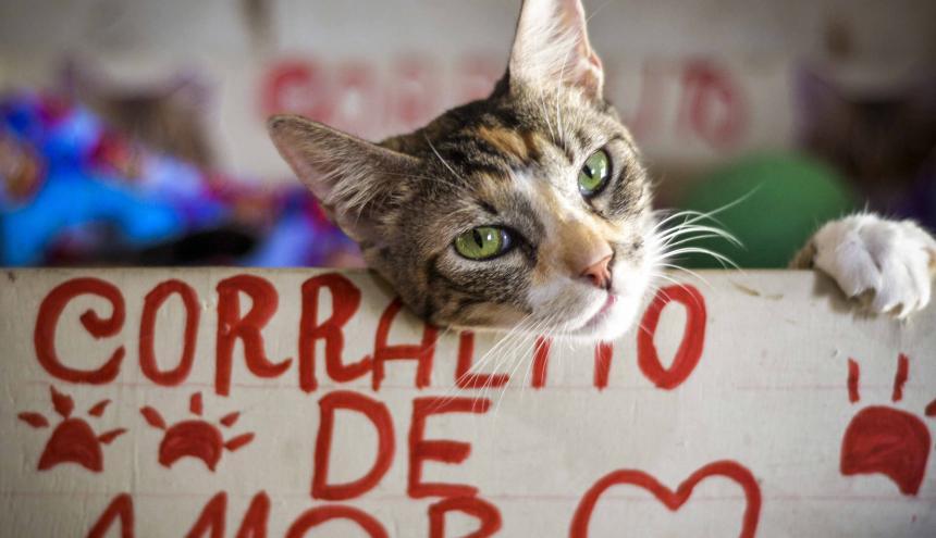 Torcoroma es una de las gatas con más edad del refugio Corralito de amor. Aún sigue buscando una familia que la quiera adoptar.