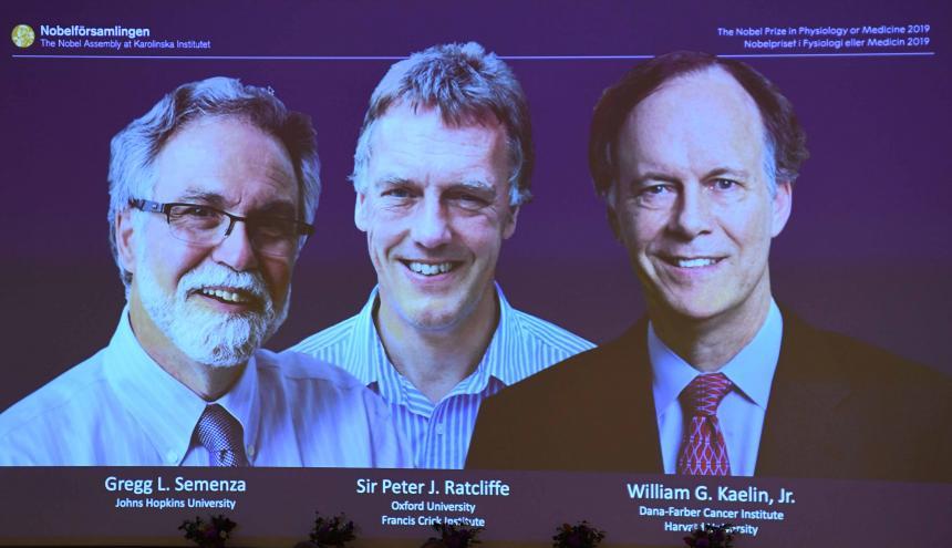 William Kaelin, Peter Ratcliffe y Gregg Semenza.