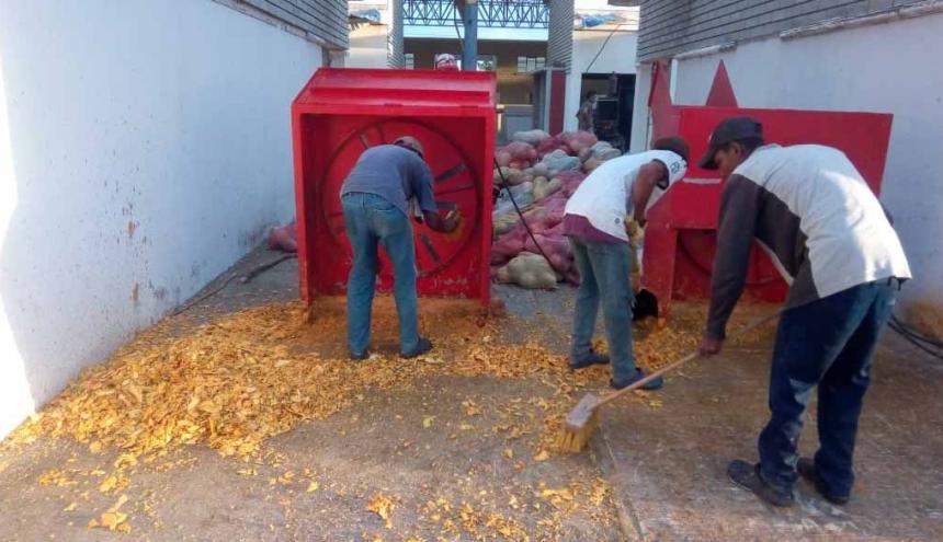 Estas son las maquinas que convierten en pequeños trozos la pulpa de ahuyama que luego es secada al sol para ser molida.
