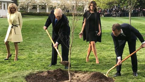 Árbol plantado por Emmanuel Macron y Donald Trump que simbolizaba la paz murió