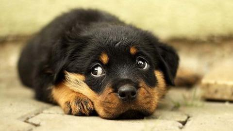 ¿Qué hay detrás de la mirada irresistible de tu perro?