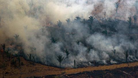 Papa Francisco pide oraciones para controlar incendios en la Amazonía