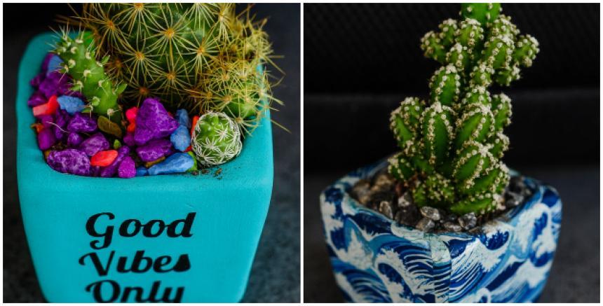 Cactus mini llegan a espacios grandes el heraldo for Cactus variedades