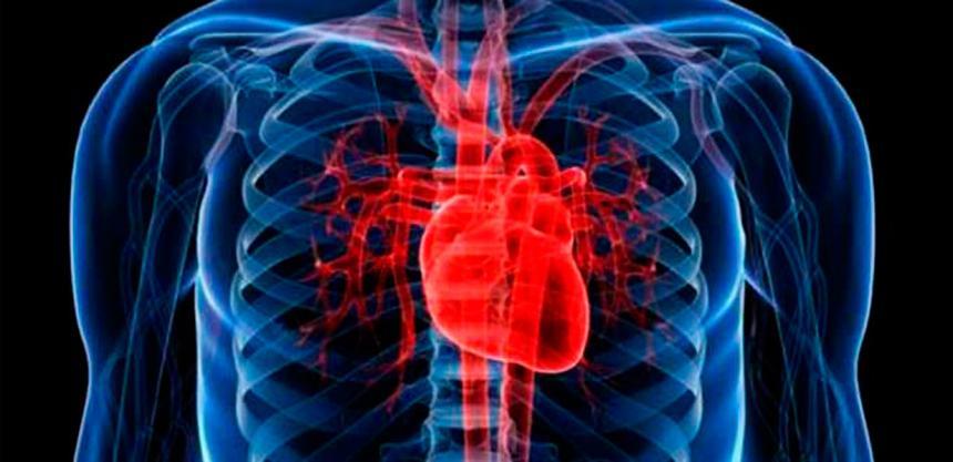 Estudio Vincula Las Señales De Los Latidos Del Corazón