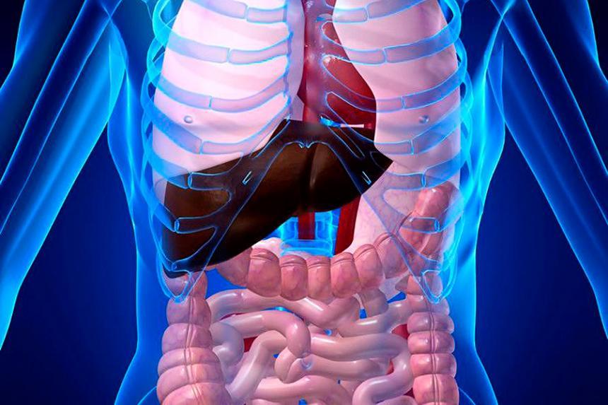 La teoría de nuevo órgano en el cuerpo humano abre debate científico ...