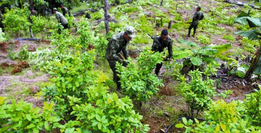 Programa de cultivos sustituirá 50.000 hectáreas ilícitas en primer año de implementación