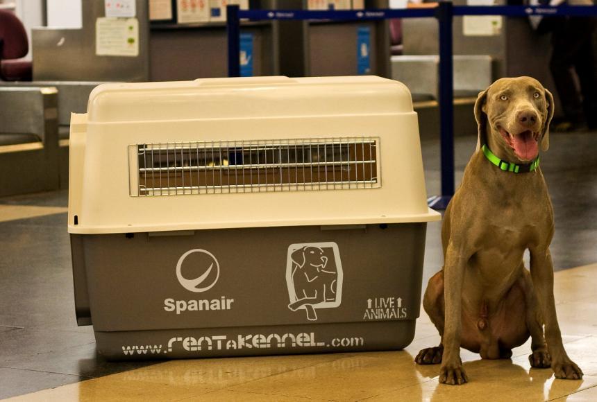 Las mascotas podrán ser transportadas en la cabina de los aviones