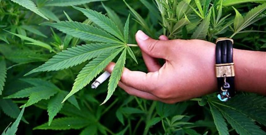 ¿Por qué el 420 es el número de la marihuana?