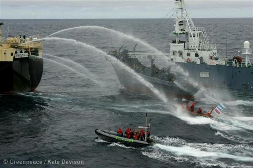 Esta país lanzó una campaña contra la caza de ballenas