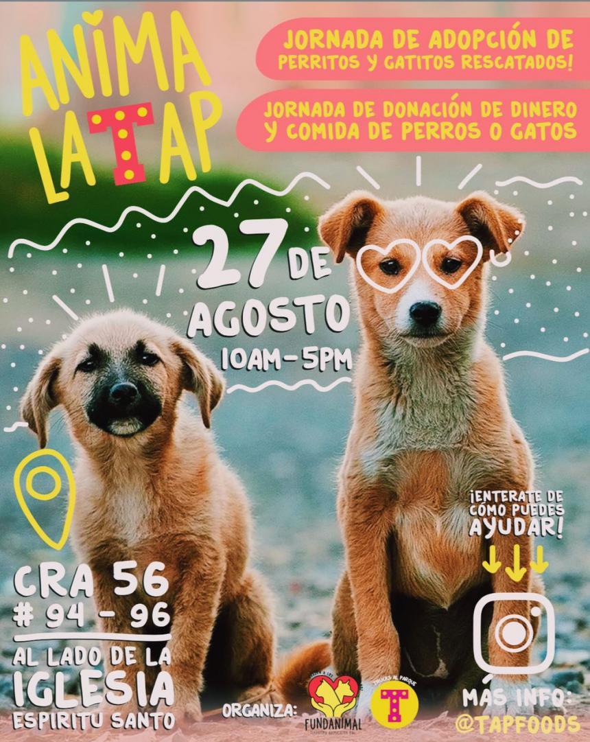 Jornada de adopción: 80 cachorros buscan nuevos dueños ...