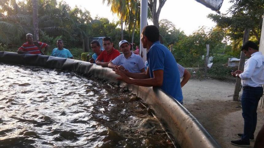 Siembran 210 Mil Peces En 12 Municipios Del Magdalena El Heraldo - Estanques-peces