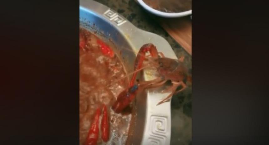 Un cangrejo se corta una tenaza para evitar ser cocinado