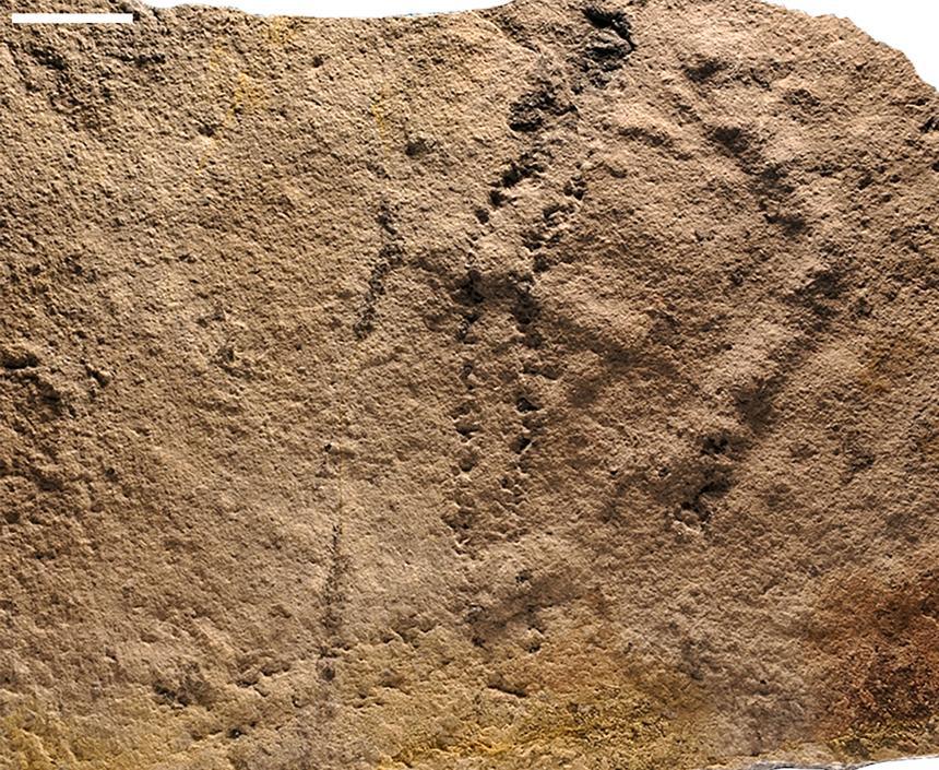 Hallan en China las huellas animales más antiguas conocidas hasta ahora