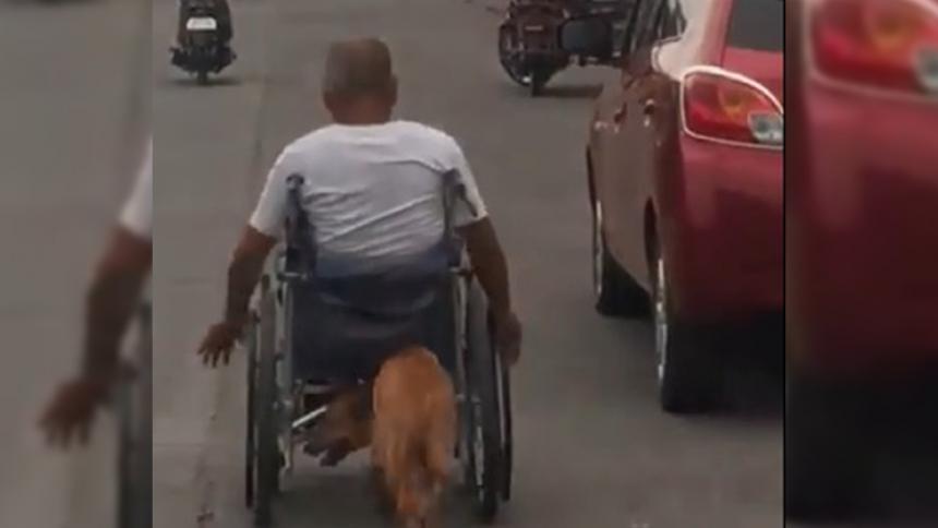 Un perro ayuda a su dueño a trasladarse empujándole la silla de ruedas — Increíble
