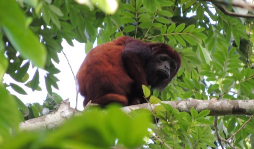 Fundación Zoológico de Barranquilla