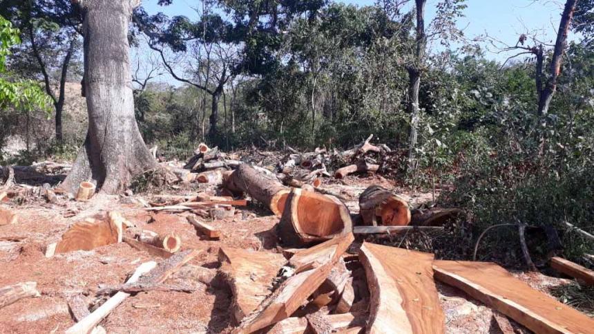 A principios de año en Juan de Acosta se reportó un caso de deforestación que estaría siendo usado para comercializar la madera.
